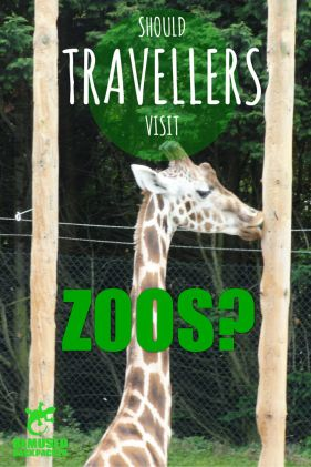 What are your opinions on zoos? Do you love them or do you think any animal captivity is wrong? I absolutely love zoos, and when they are run well and done right, they can be an absolutely vital part of the conservation chain.It is the thought of STT that zoos are a definite part of travel& tourism. Just see(our jungle boogie&zoo review)