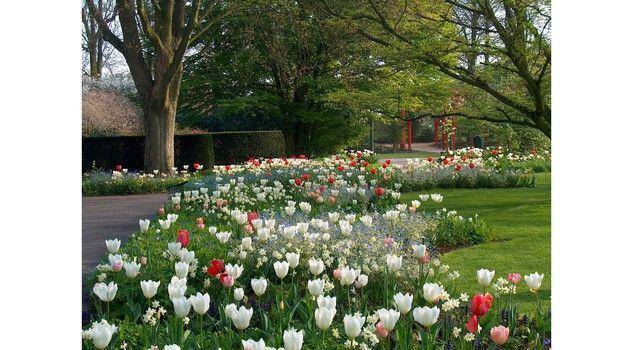 Nel giardino dei tulipani a Villa Pisani Bolognesi Scalabrin - Vescovana (Padova) Italy- - Lifestyle