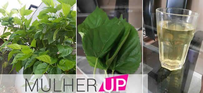 Saiba tudo sobre o chá da folha de amora e seus benefícios na menopausa, queda de cabelo, rejuvenescimento, longevidade entre outros