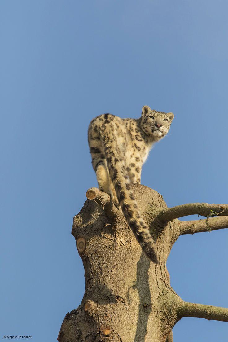 Junga au sommet de l'arbre de son nouveau parc.