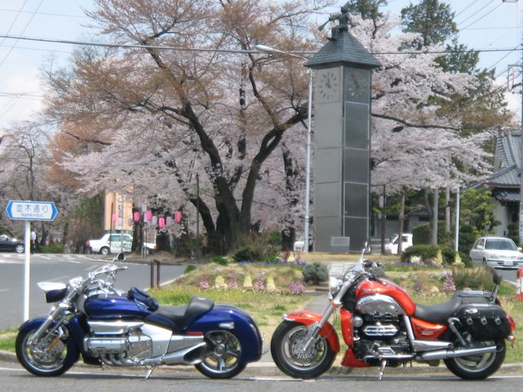 2007 TRIUMPH ROCKET3 & VALKYRIE RUNE1800.With rows of cherry blossom trees in full blossom