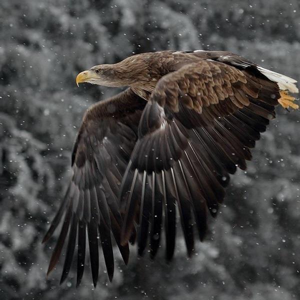 сутки каждый картинки орла с добычей камадо