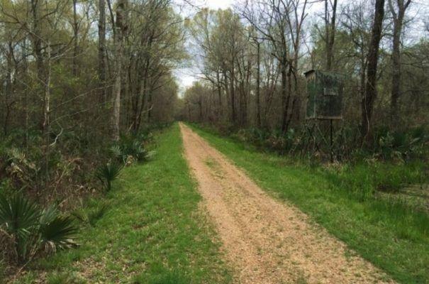Recreational Property with Camp in Louisiana -blog.landflip.com
