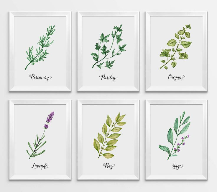 Herbs Print, Watercolor Herbs, Kitchen Print, Kitchen Decor, Herbs Wall Art, Herbs Printable, Kitchen Printable, Botanical Printable, Herbs by WallPrintFactory on Etsy https://www.etsy.com/ca/listing/552418581/herbs-print-watercolor-herbs-kitchen