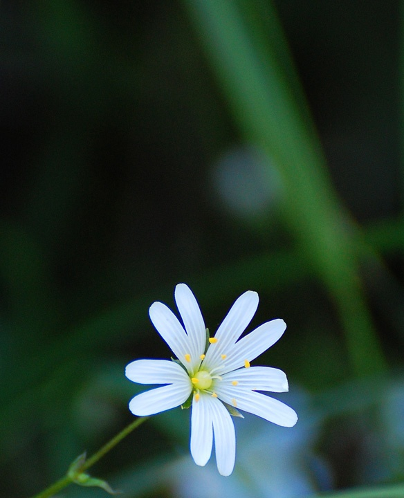 Just a flower.