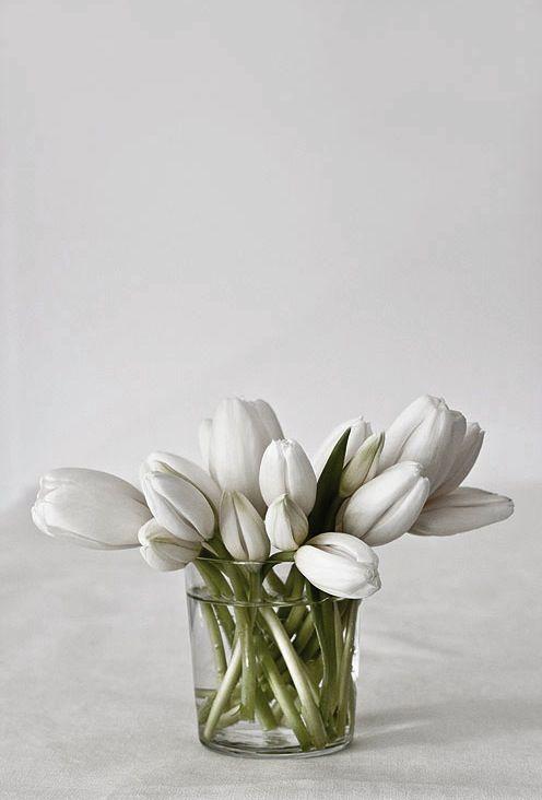 Tulipe white*: