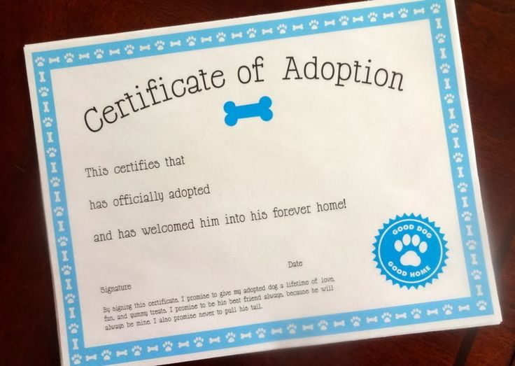1000 images about puppy on pinterest dog care adoption and free printables for Printable adoption certificate