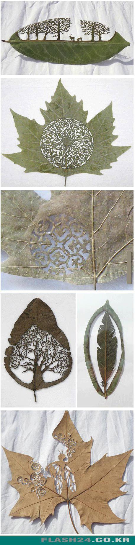 나뭇잎 아트.jpg