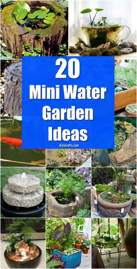 20 Charming And Cheap Mini Water Garden Ideas For Your Home And Garden {With tutorial links} via @vanessacrafting