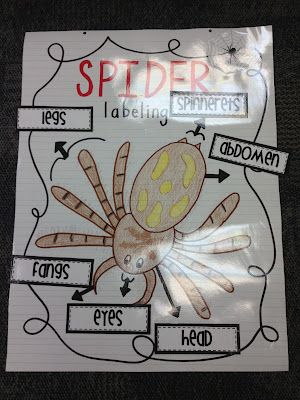 Mrs. Terhune's First Grade Site!: Spider Unit