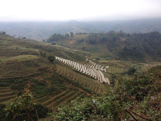 The Rice Terraces of Sapa, Vietnam.