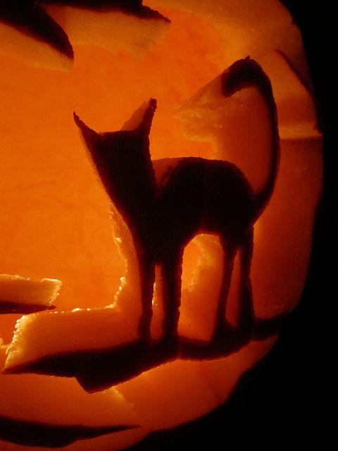 An awkward pumpkin carving adventure.