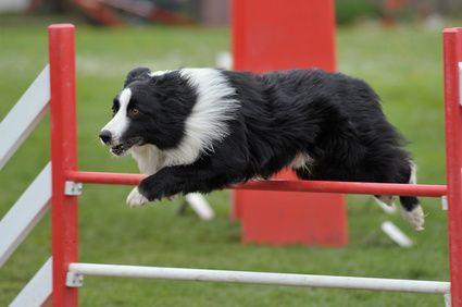 Se il tuo cane fa molta attività fisica potrebbe aver bisogno di un'alimentazione particolare, in grado di fornirli un adeguato apporto energetico. Farmina N&D Grain Free Pesce & Arancia ha un elevato contenuto proteico, adatto a quelle razze di cane che praticano molta attività fisica.