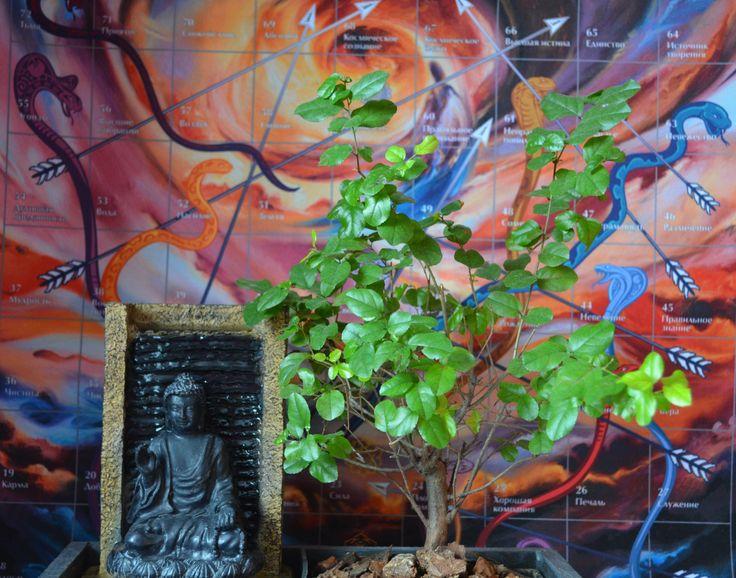 лила игра жизни будда бонсай водопад