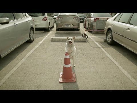 THE DOG : ธนาคารเกียรตินาคิน (Official HD) - YouTube