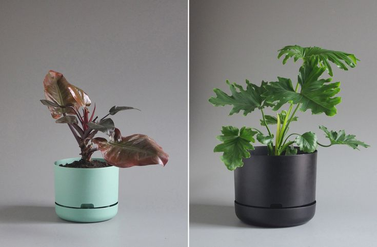Conceived by an award-winning Australian designer, these clever planters will brighten any interior
