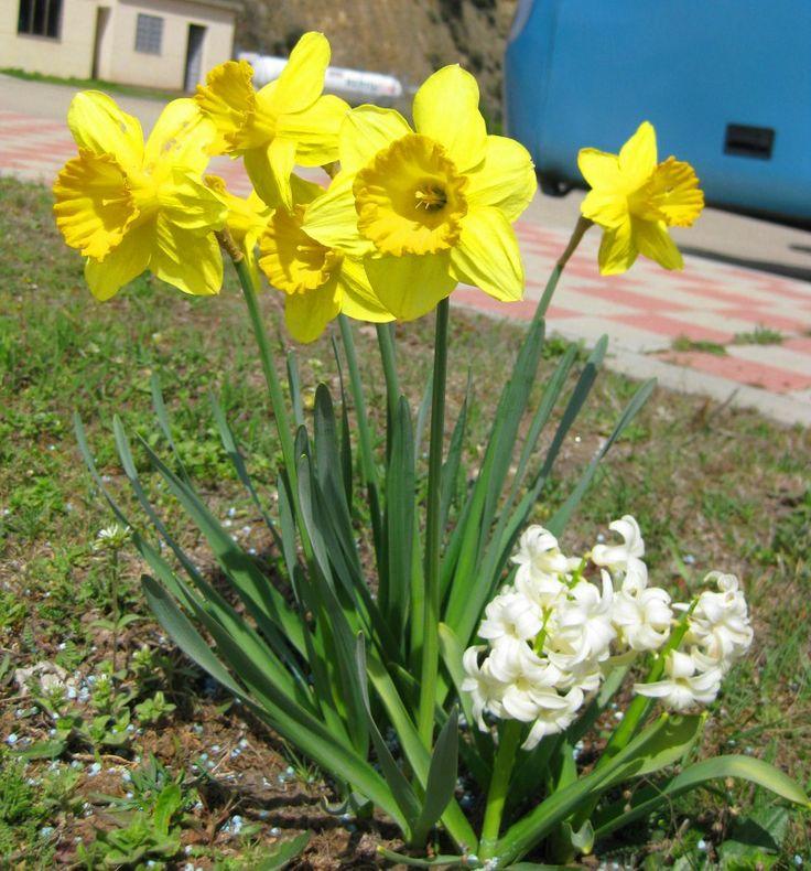 Ver más en: www.sirenasinmar.blogspot.com www.facebook.com/SugarherArts