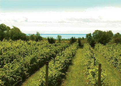 Prince Edward County Vineyards in Ontario