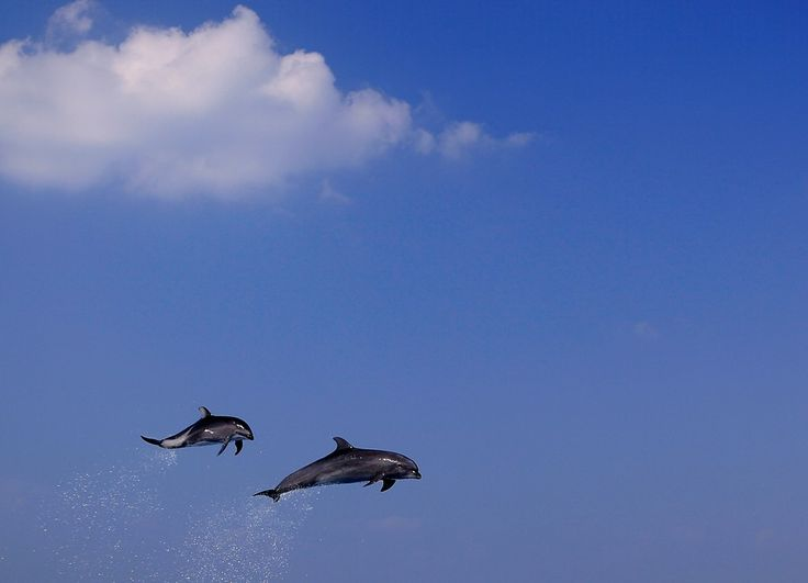 The Flying Dolphins by Ramsey Pui on 500px