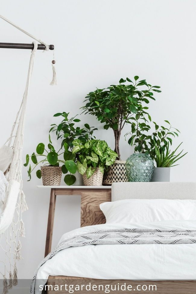 Houseplants For Bedrooms Indoor Plants For The Bedroom Great Ideas For Displaying And Growing Plants In The Bed Bedroom Plants Indoor Plants House Plant Care