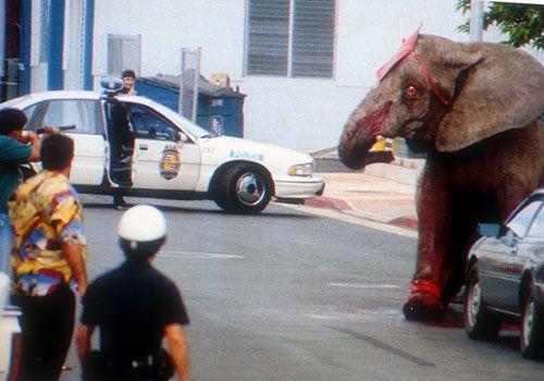 How Do You Kill An Elephant  Lazer Horse