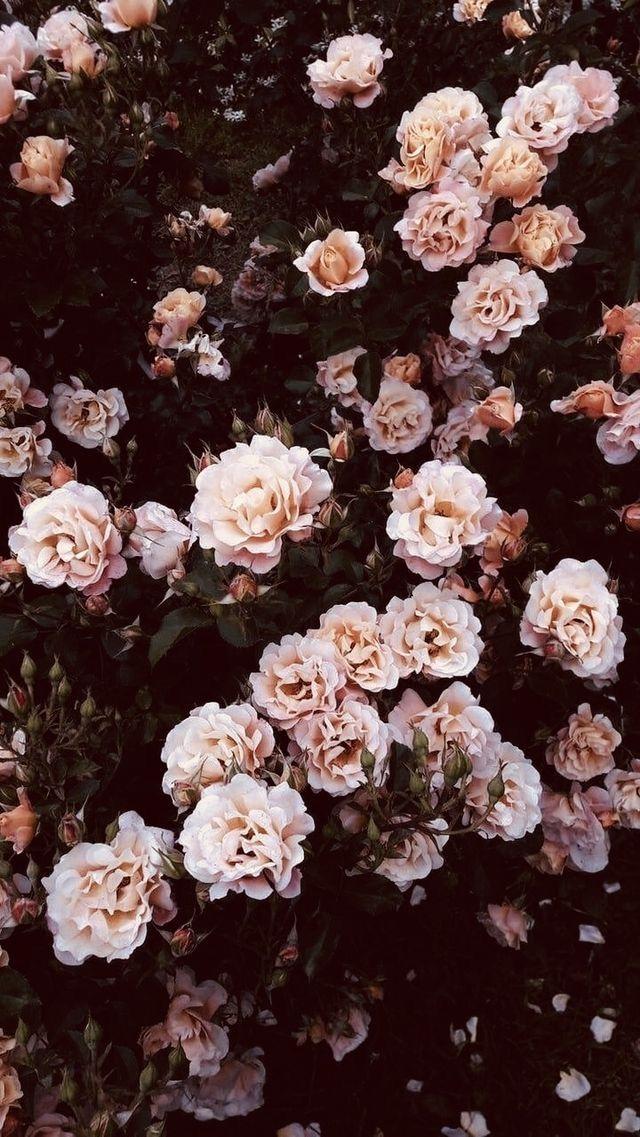 Flower Phone Wallpaper Backgrounds Phone Wallpapers Cellphone Wallpaper