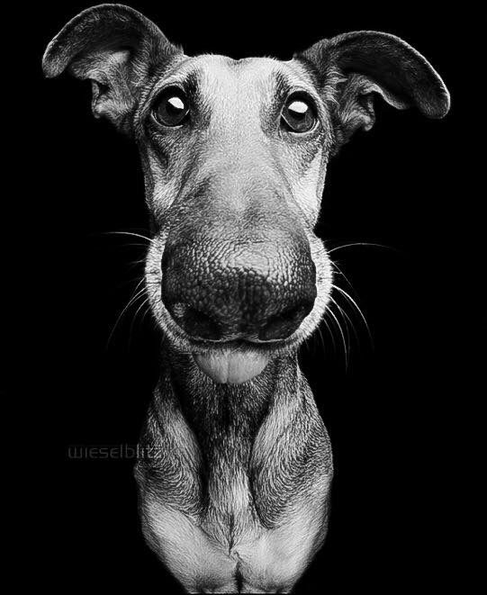 Black And White Animal Photography Dog