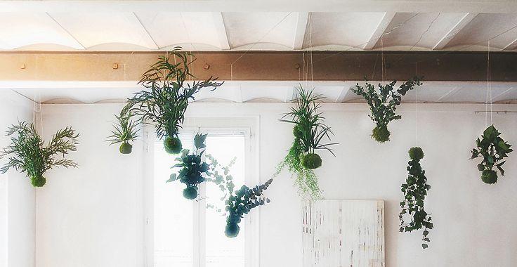 jardin suspendu r alis par adventive agencement v g tal d 39 int rieur plantes stabilis es. Black Bedroom Furniture Sets. Home Design Ideas