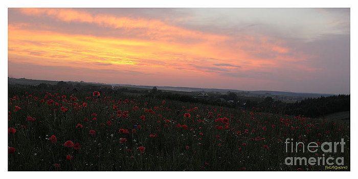 Wonderful poppy fields Galicia. by  Andrzej Goszcz