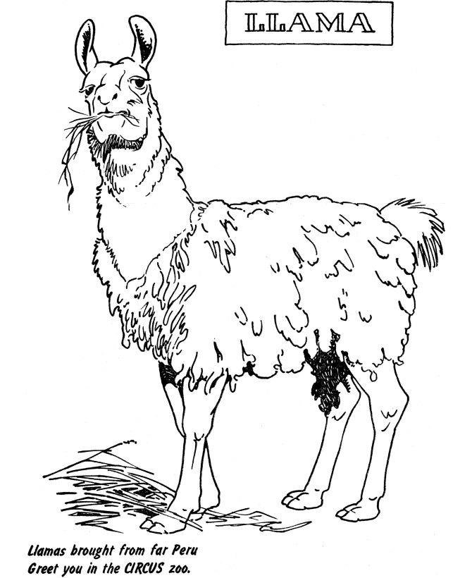 coloring pages llamas - photo#11
