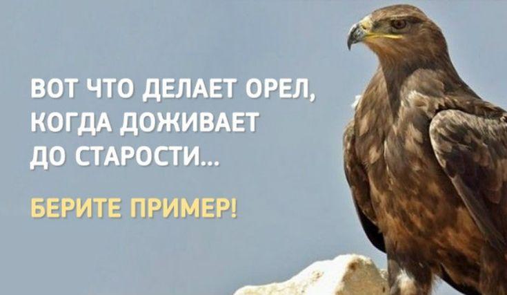 В тот момент, когда орёл наконец доживает до свой старости, он делает весьма удивительную вещь