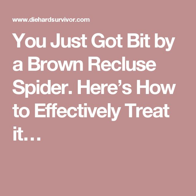 You Just Got Bit by a Brown Recluse Spider. Here's How to Effectively Treat it…