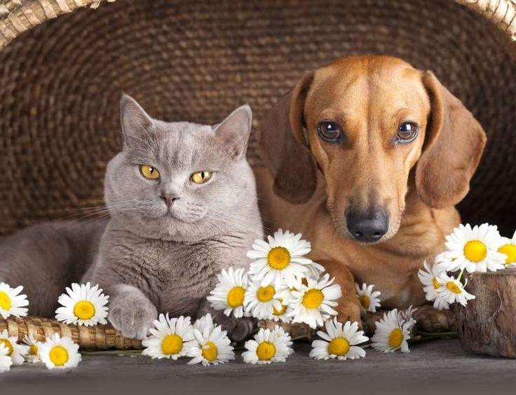 10 μαθήματα που μας διδάσκουν τα ζώα