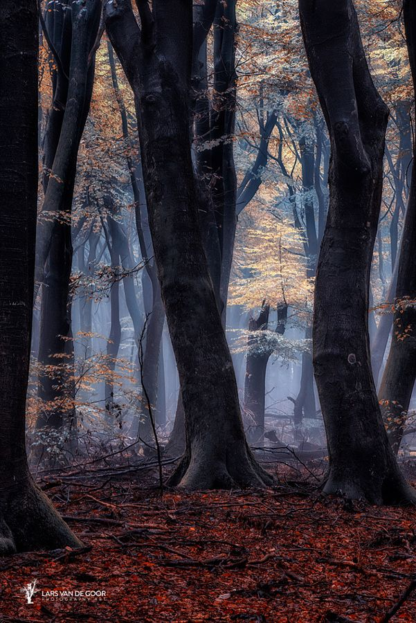 ~ Mystical Forest ~