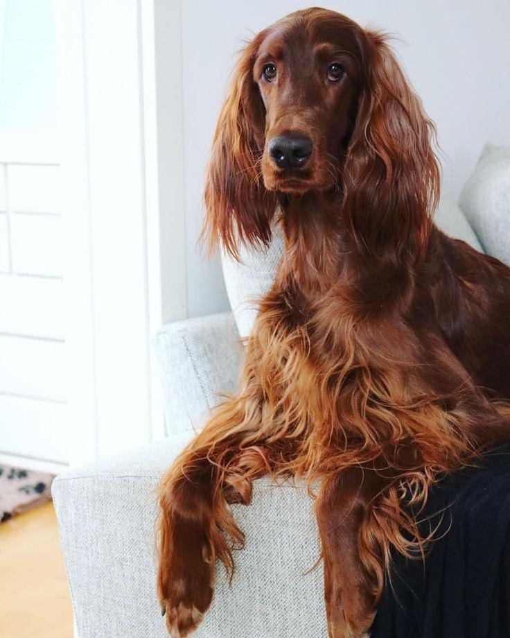 dog obedience training advice dogtraininglife