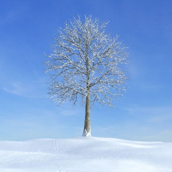 Tree In Snow 3d Model Winter Trees Snow Covered Trees Model Tree