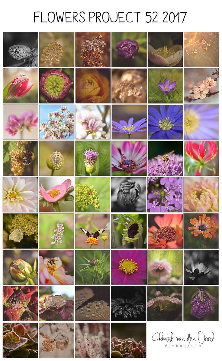 All 52 photo's together ! Lensbaby Velvet56 Flowers