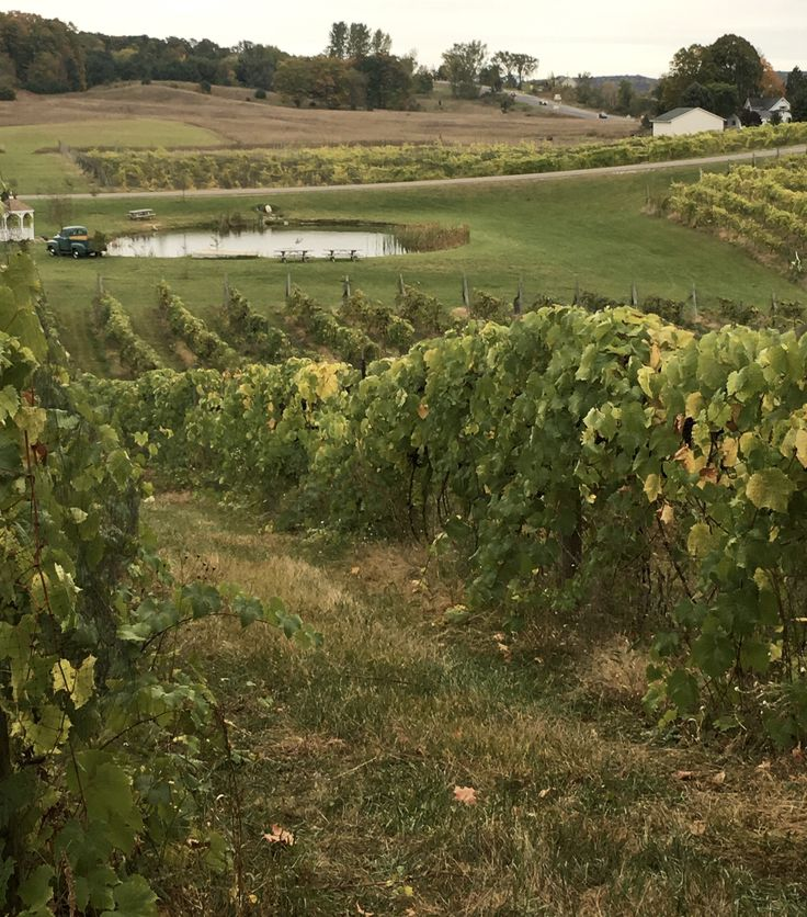 Northern Michigan Beer & Wine Color Tour, Petoskey & Harbor Springs - A Girl and a Kiwi