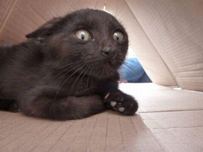 интересно о котах | Смешное видео о кошках, Смешные фото кошек