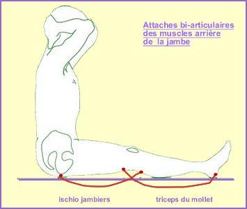 l'étude d'une flexion paschimottanasana  centre jaya