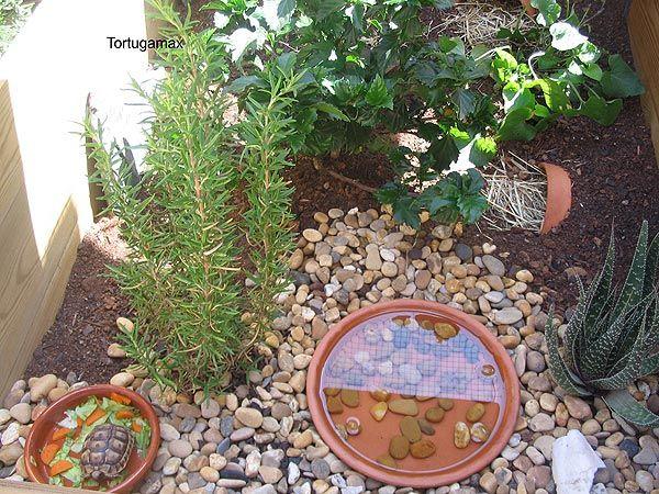 Terrario para tortugas tortugas pinterest for Peceras para tortugas