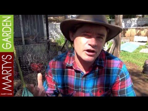 Backyard Permaculture Chicken Coop Part 2 Martys Garden - YouTube