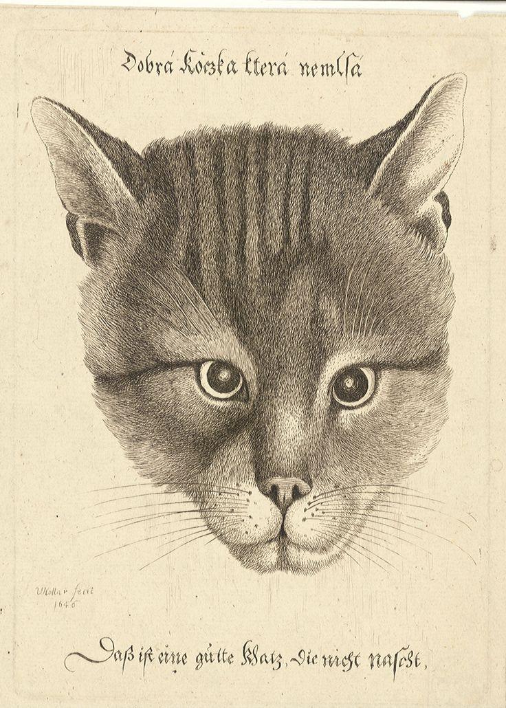 Václav Hollar - Dobrá kočka, která nemlsá.