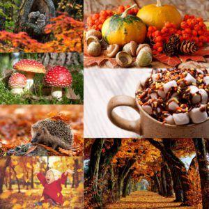 Bijna herfst… Lees waarom ik hier zo'n zin in heb op www.addellen.nl