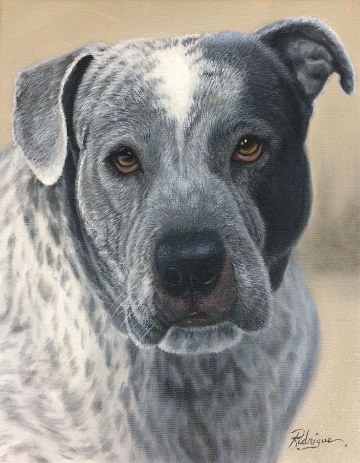 View it larger on my site -Pitbull Mastiff cross pet portrait oil painting by pet portrait artist Carole Rodrigue #dogs #dogart #dogpaintings #pets #petportraits #giftsfordoglovers #petmemorials #petpaintings #petportraitsinoil #realisticdogart #cuteanimals #petportraitartists #animals #animalart