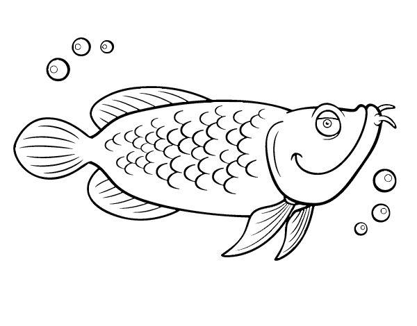 Dibujo de Bacalao para colorear | Dibujos de Animales | Pinterest