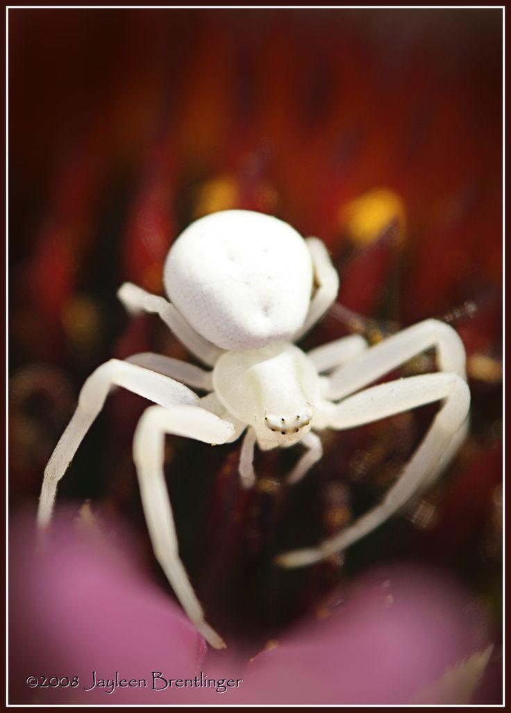 Belíssima aranha
