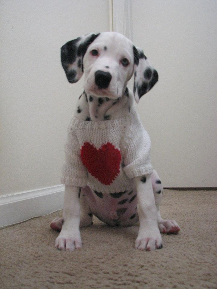 valentine's day heart dog craft