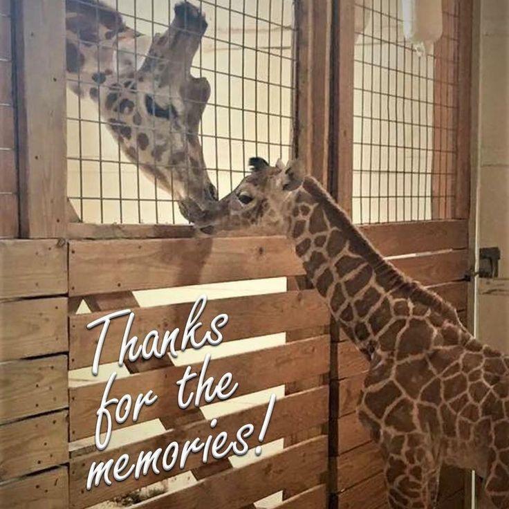 346 Best Animal Advenure Park 2017 ️ Images On Pinterest