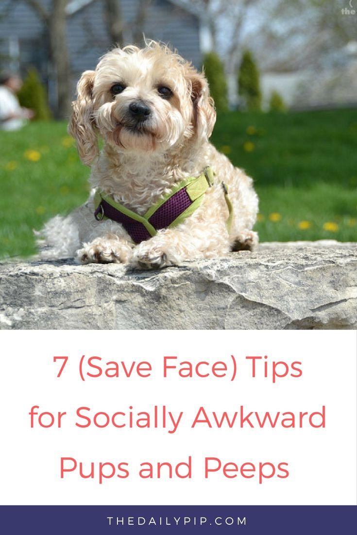 Tips for  socially awkward dogs and their peeps.